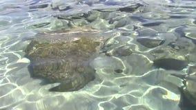 Rocce subacquee archivi video