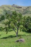 Roccia, albero e collina Immagine Stock