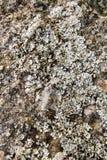 Roccia con il piccolo fungo Fotografia Stock Libera da Diritti