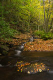 Roccia con le foglie e l'insenatura. Montseny, Spagna. Fotografia Stock Libera da Diritti