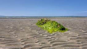 Roccia coperta alga Immagine Stock