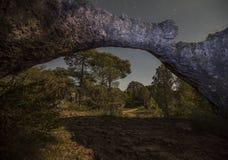 Roccia Cuenca V del fungo Fotografia Stock Libera da Diritti