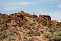 Roccia del cactus Fotografie Stock Libere da Diritti