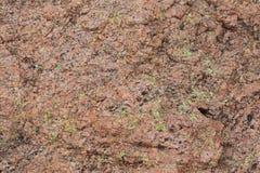 Roccia del calcare con muschio verde intenso Fotografia Stock