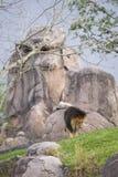 roccia del leone di formazione fotografie stock