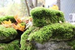 Roccia del muschio Fotografie Stock