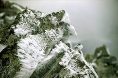 roccia del tipo di uccello Immagine Stock