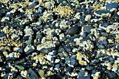 Roccia dell'oceano Fotografia Stock