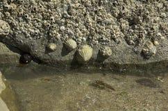 Roccia della spiaggia Fotografie Stock Libere da Diritti