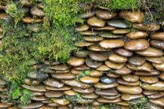 Acqua della roccia del muschio Fotografie Stock