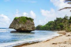 Roccia di isolato di Overgreen, spiaggia delle Barbados fotografie stock libere da diritti