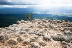 Roccia di sforzo con la nuvola e la foresta Fotografia Stock