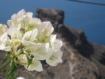 Roccia di Skaros e dei fiori fotografie stock