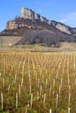 Roccia di Solutre con le vigne Immagini Stock Libere da Diritti