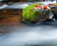 Roccia e foglie di acero in corrente Immagini Stock
