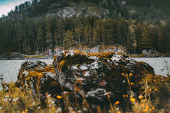 Roccia e foresta sulla sponda del fiume, fucilazione dello inclinazione-spostamento Fotografie Stock Libere da Diritti