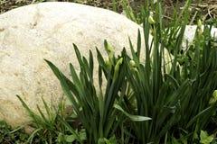 Roccia e germogli Fotografia Stock
