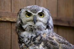 Roccia Eagle Owl Immagine Stock