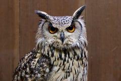 Roccia Eagle Owl Fotografie Stock Libere da Diritti