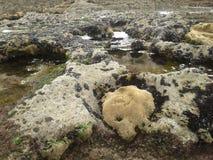 Roccia ed acqua Immagine Stock