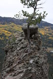 Roccia ed albero fuori su un bordo Fotografia Stock
