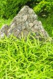 Roccia ed erba verde Immagini Stock Libere da Diritti