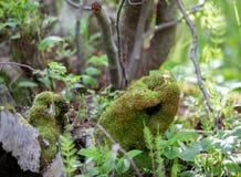 Roccia a forma di della mano muscosa nella foresta di Rocky Mountain National Park fotografia stock libera da diritti