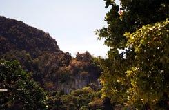 Roccia fra vegetazione tropicale thailand fotografia stock