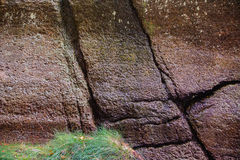 Roccia incrinata bagnata ed erba verde Immagine Stock Libera da Diritti
