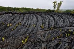 Roccia indurita della lava Immagine Stock