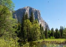 Roccia in mezzo alla foresta Fotografie Stock