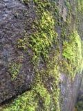 Roccia muscosa Immagine Stock Libera da Diritti