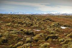 Roccia muscosa della lava Immagine Stock