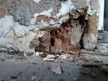 Roccia nociva dello strato e di legno Fotografia Stock Libera da Diritti