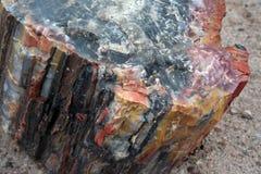 Roccia petrificata variopinta dell'albero Fotografia Stock Libera da Diritti