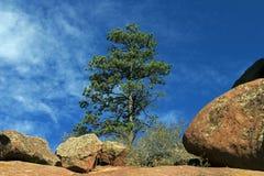 Roccia rossa con il pino Fotografia Stock Libera da Diritti