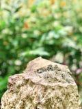 Roccia su verde Fotografia Stock