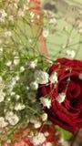 Roces y flores Fotos de archivo libres de regalías