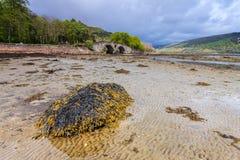 Rocha coberta com a alga em uma cama de rio Imagem de Stock Royalty Free