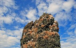 Rocha com gaivotas Foto de Stock