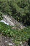 A rocha com grama, o arbusto conífero e a terra Fotos de Stock Royalty Free