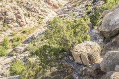Rocha de Boulder sobre uma árvore em Dragon Canyon preto Fotos de Stock Royalty Free