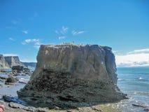 Rocha do albatroz dos raptores do cabo em Napier, Nova Zelândia fotos de stock