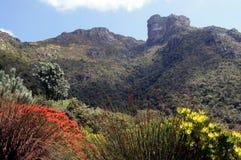 Rocha do castelo que negligencia jardins botânicos de Kirstenbosch Fotografia de Stock Royalty Free