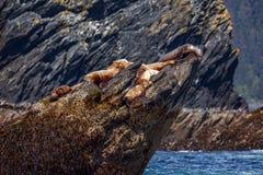 Rocha do ` dos leões de mar Imagem de Stock