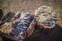 A rocha do jornal em Forest National Park hirto de medo, o Arizona foto de stock