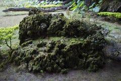 Rocha do musgo Imagens de Stock