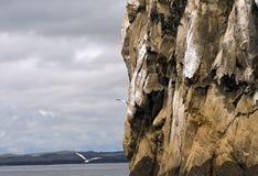 Rocha do retrocesso, Galápagos fotos de stock
