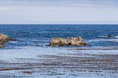 Rocha do selo com os leões de mar na movimentação de 17 milhas Fotografia de Stock Royalty Free