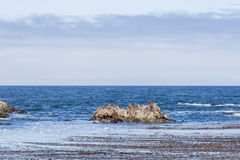 Rocha do selo com os leões de mar na movimentação de 17 milhas Imagem de Stock